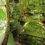 Stones covered in moss flanking a wooden staircase along a hiking trail in the forest.