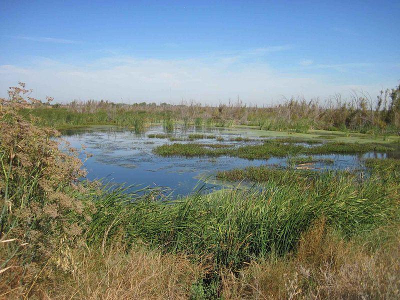 File:Beautiful marsh wetland landscape.jpg