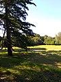Beautiful meadow.jpg