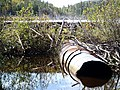 Beaver dam near Pushkin Fire Tower - panoramio.jpg