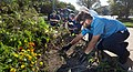 Beet Harvest (37105032573).jpg