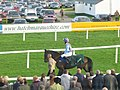 Best Mate - His Last Race - geograph.org.uk - 1292602.jpg
