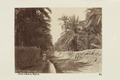 Bild från familjen von Hallwyls resa genom Algeriet och Tunisien, 1889-1890 - Hallwylska museet - 91886.tif