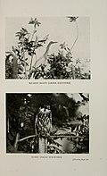Bird-hunting through wild Europe (1908) (20357380926).jpg
