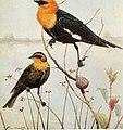 Bird-lore (1912) (14569085398).jpg
