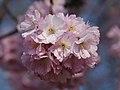 Blüten Baum.JPG
