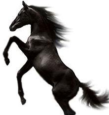 De quelle race est Black, le cheval de l' « Etalon noir »? 220px-Black_Stallion