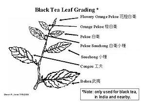 Tea leaf grading - Black tea grading