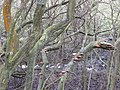 Blackwell Trail - Fungi growing on trees - geograph.org.uk - 1140769.jpg