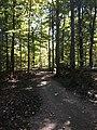 Blendon Woods Metro Park October 2018 19.jpg