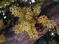 Blooming Karupia3.jpg