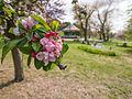 Blossom (detail) (9029194858).jpg