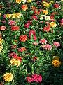 Blumenbeet bunt Heidelberg.JPG