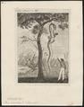 Boa cenchris - 1700-1880 - Print - Iconographia Zoologica - Special Collections University of Amsterdam - UBA01 IZ11900085.tif