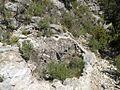 Bocamina protegida (14563293333).jpg