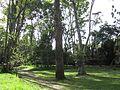 Bogotá árboles Humedal de Córdoba.JPG