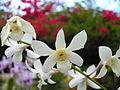 Boholflora8.jpg