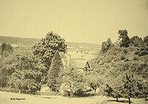 Bois Vigneron 2015.jpg