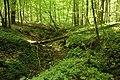 Bois de la Louvière - Livierenbos, Flobecq - Vloesberg 04.jpg