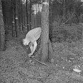 Bosbewerking, arbeiders, boomstammen, gereedschappen, zagen, Bestanddeelnr 251-9118.jpg