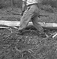 Bosbewerking, arbeiders, boomstammen, werkzaamheden, Bestanddeelnr 251-7858.jpg