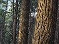 Bosc de Can Deu el 2004 09.jpg