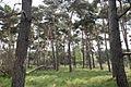 Boshoverheide - Weert - 20536827 - RCE.jpg