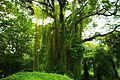 Bosque de La Habana 15.jpg
