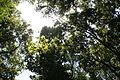 Bosque del Cedro 2.jpg