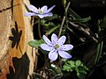 Botanic Garden - Cluj-Napoca (2371225451).jpg