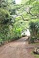 Botanical Gardens Kauai, Hawaii - panoramio (21).jpg