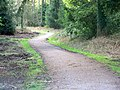 Bridleway, Puddletown Forest - geograph.org.uk - 1180938.jpg