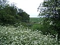 Bridleway Bridge SW of Alconbury Weston - geograph.org.uk - 462056.jpg