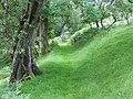 Bridleway near Dinas, Cwm Doethie, Ceredigion - geograph.org.uk - 512040.jpg