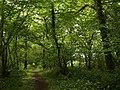 Bridleway through the woods - geograph.org.uk - 1317394.jpg