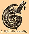 Brockhaus and Efron Encyclopedic Dictionary b32 871-3.jpg