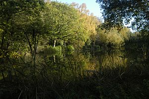 Capability Brown - Brown's Pond at Sandleford, Berkshire. One of a string of former priory fish ponds adapted by Brown who was at Sandleford on behalf of Mrs Montagu from 1781.