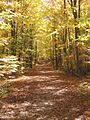Bruce Trail-Mono Cliffs.jpg