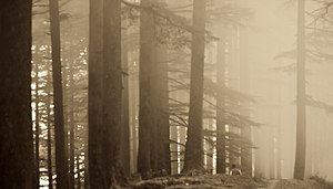 Chakrata - Misty mornings at Budher forest rest house