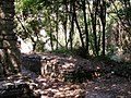 Butrint, Jungle - Driving Albania 58 (3867668512).jpg