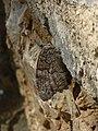 Butterfly 1400032 Nevit.jpg