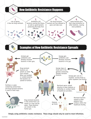 Infographic on how antibiotic resistance evolves and spreads