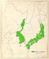 CL-33 Pinus densiflora range map.png