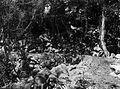 COLLECTIE TROPENMUSEUM Man te paard op een door een terrein van vulkanisch gesteente aangelegde weg bij Bama TMnr 60007463.jpg