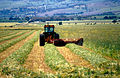 CSIRO ScienceImage 4569 Cutting hay at Aldinga south of Adelaide in South Australia 1992.jpg