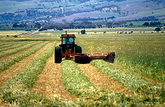 Aldinga, South Australia - Cutting hay near Aldinga, south of Adelaide in South Australia, 1992