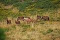 Caballos cerca de Calvos de Bande - panoramio.jpg