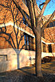 Callie-Somsen-WSU-Tree.jpg