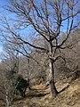 Camí de Coll de Barretó a Massats (desembre 2010) - panoramio.jpg
