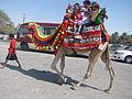Camel - ഒട്ടകം 02.JPG